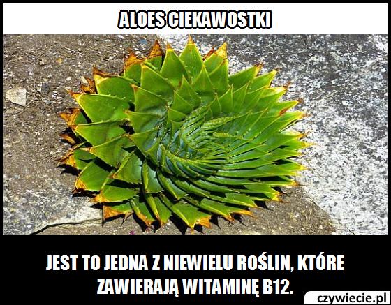 Która roślina zawiera witaminę B12?