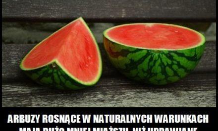 Czym różnią się dziko rosnące arbuzy od uprawianych?