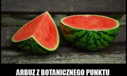 Arbuz jest jagodą?