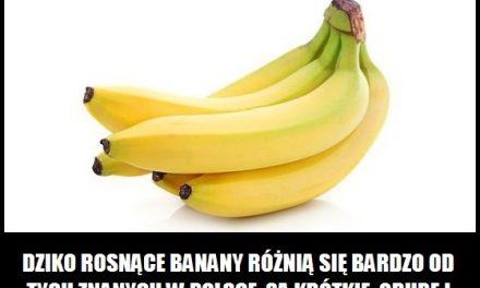 Czym różnią się dziko rosnące banany?