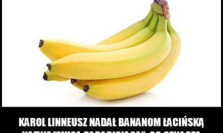 Jak Karol Linneusz nazwał banany?