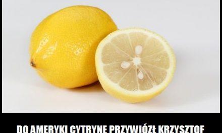 Kto do Ameryki przywiózł pierwszy cytrynę?