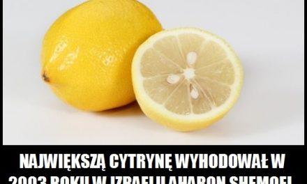Ile ważyła najcięższa cytryna?