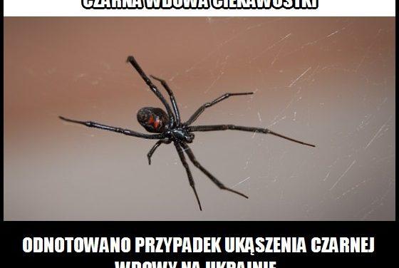 Ukąszenie którego jadowitego pająka odnotowano na Ukrainie?