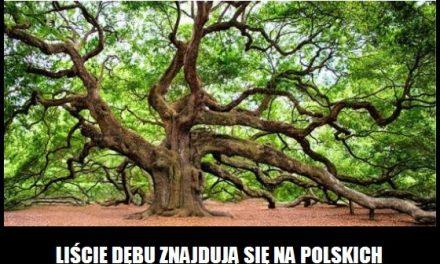 Liście jakiego drzewa znajdują się na polskich monetach?