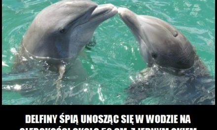 Jak śpią delfiny?