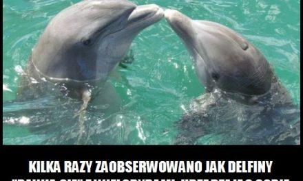 Jak bawią się delfiny z wielorybami?