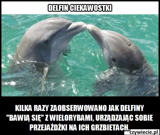Delfin ciekawostka 5