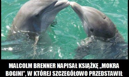 Delfin ciekawostka 4