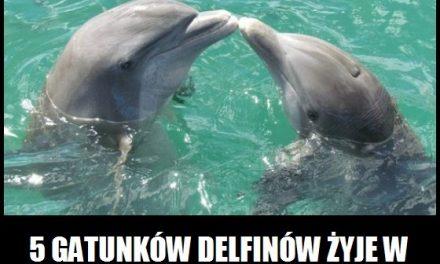 Czy delfiny można spotkać w rzekach?
