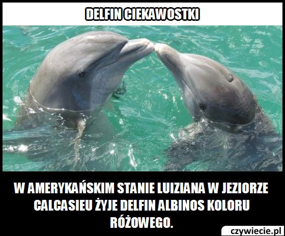 Delfin ciekawostka 3