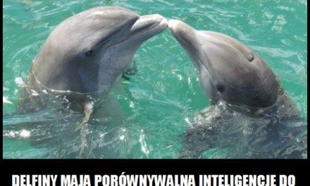 Szympansy są inteligentniejsze od delfinów?