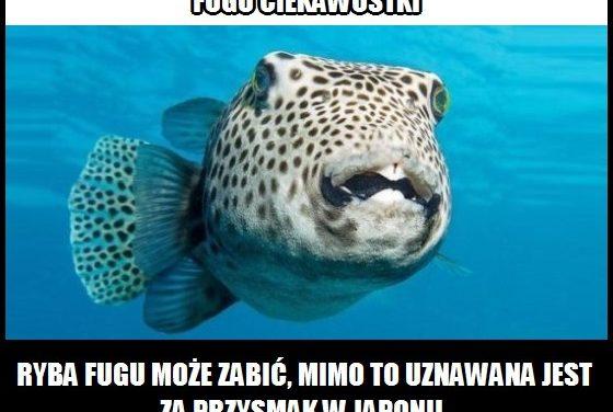 W którym kraju ryba Fugu uznawana jest za przysmak?