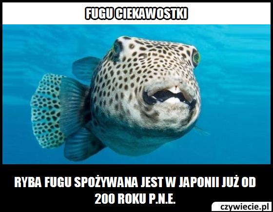 Fugu ciekawostka 2