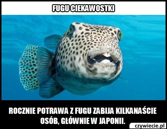 Czy ryba Fugu może zabić człowieka?