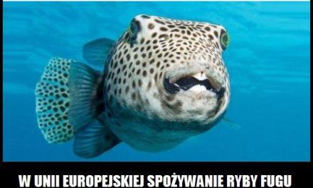 W Unii Europejskiej można zjeść rybę Fugu?