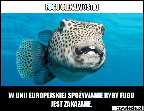 Fugu ciekawostka 1