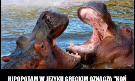 Co w języku greckim oznacza nazwa hipopotam?