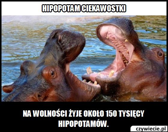 Hipopotam ciekawostka 10