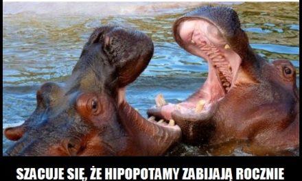 Ile osób rocznie zabijają hipopotamy?