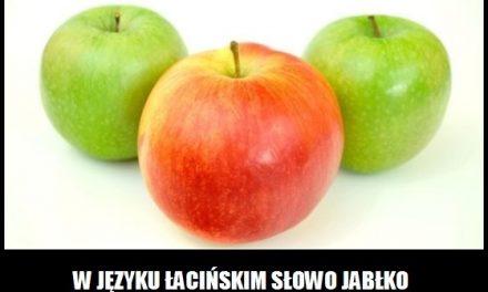Co oznacz słowo jabłko w języku łacińskim?