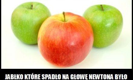 Z jakiego gatunku było jabłko, które spadło na głowę Newtona?