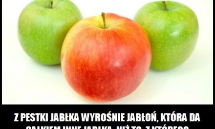 Co wyrośnie z pestki jabłka?
