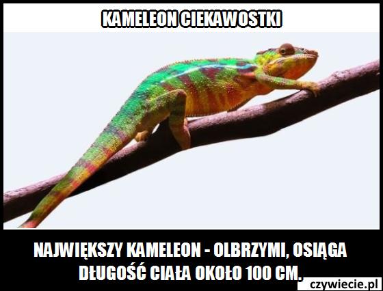 Kameleon ciekawostka 1