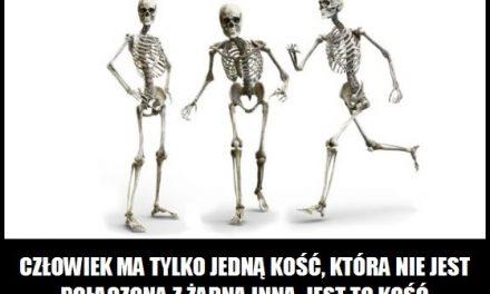 Gdzie znajduje się kość gnykowa?