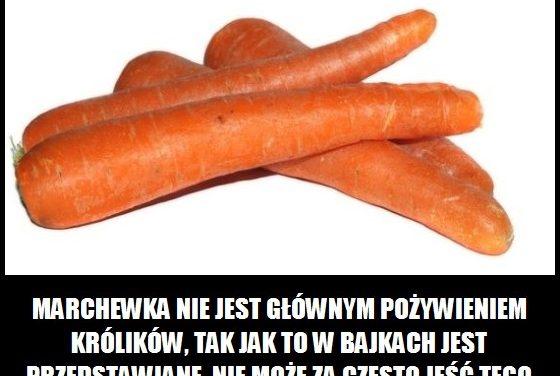 Marchewka jest głównym pożywieniem królików?
