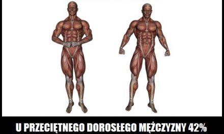 Ile procent masy ciała to mięśnie u przeciętnej dorosłej osoby?