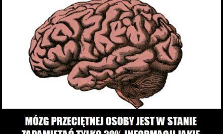 Ile procent informacji jest w stanie zapamiętać ludzki mózg?