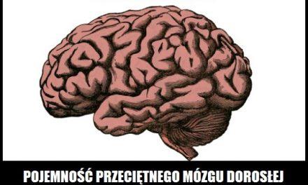 Jaką pojemność w GB ma ludzki mózg?