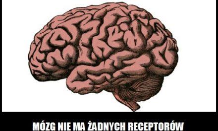 Ile receptorów nerwowych ma ludzki mózg?