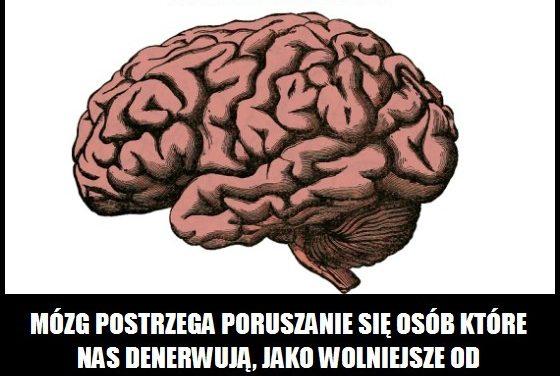 Jak mózg postrzega poruszanie się osób, które nas denerwują?