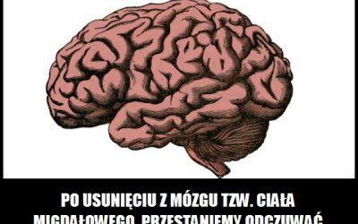 Po usunięciu której części mózgu przestaniemy odczuwać strach?