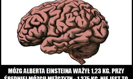 Ile ważył mózg Einsteina?
