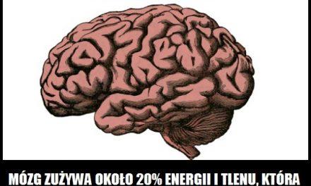Ile energii i tlenu zużywa ludzki mózg?