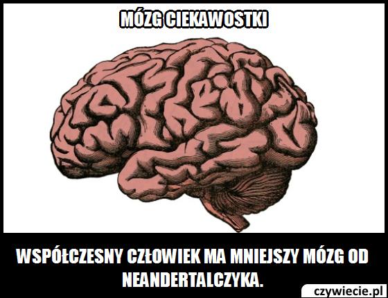 Mózg ciekawostka 9