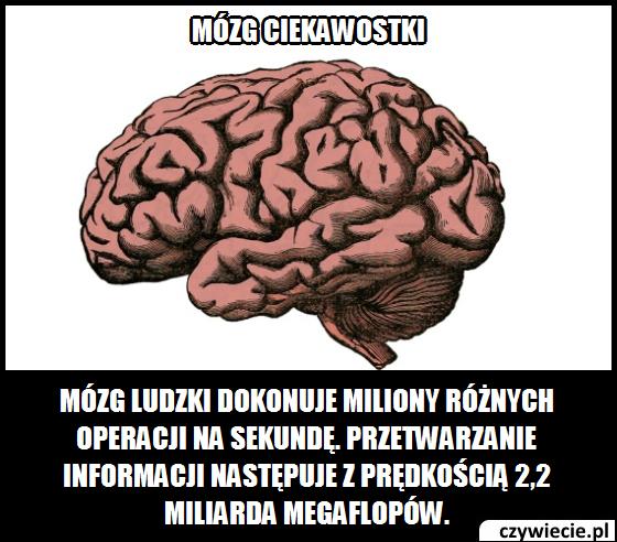 Mózg ciekawostka 10