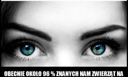Ile procent znanych zwierząt ma narząd wzroku?