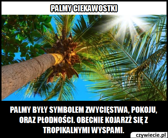 Palmy ciekawostka 2