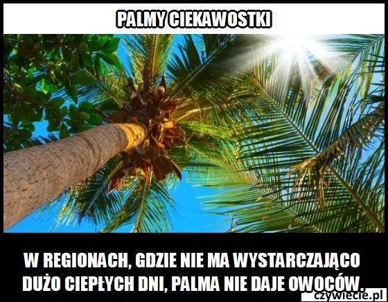Palmy ciekawostka 3