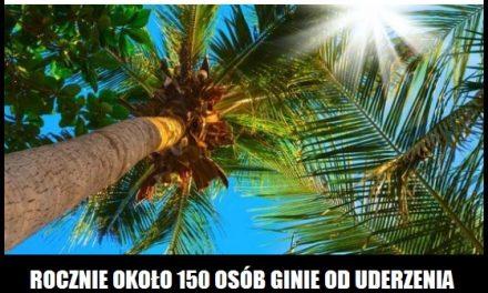 Ile osób rocznie zabijają spadające kokosy?