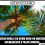 palmy6