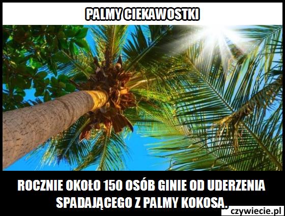 Palmy ciekawostka 1