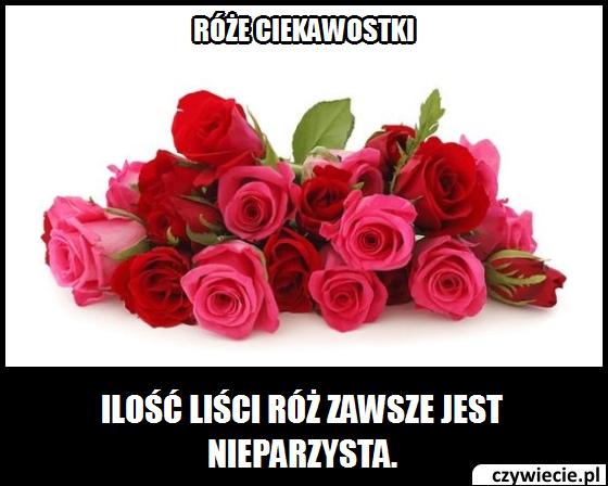 Róże ciekawostka 3