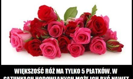 Ile płatków mają róże?