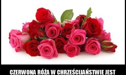 Czego symbolem w chrześcijaństwie jest czerwona róża?