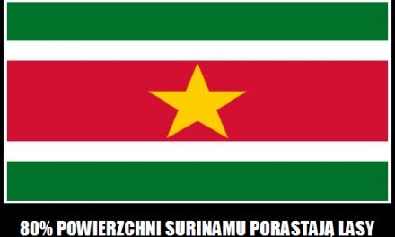 Jaki procent powierzchni Surinamu porastają lasy deszczowe?